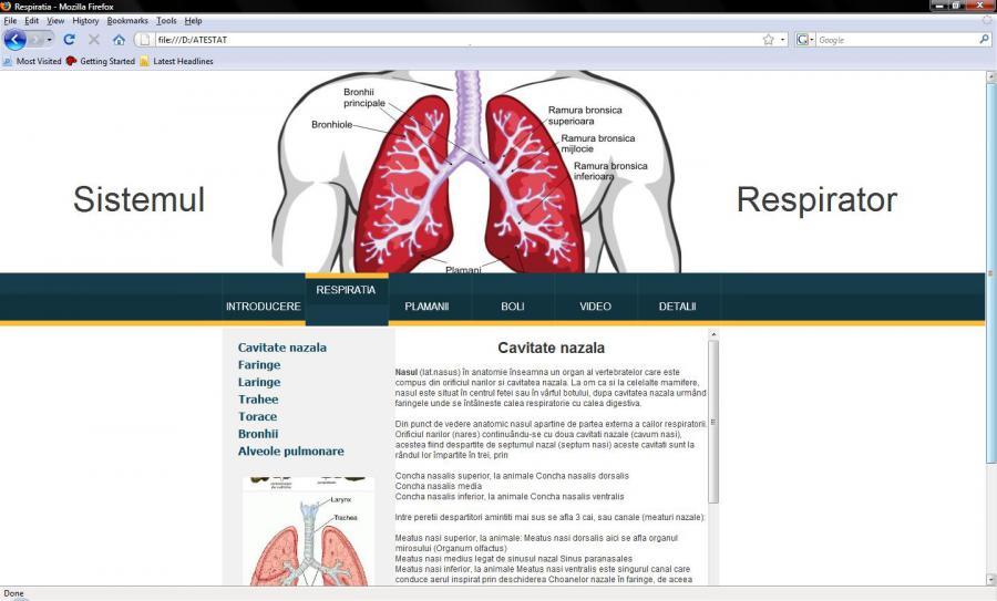 Atestat informatica Sistemul respirator