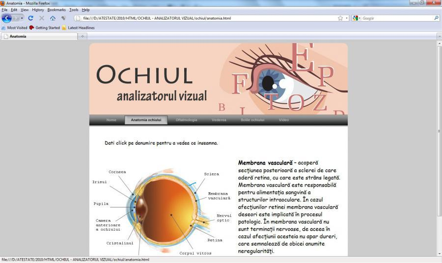 Atestat informatica Ochiul - Analizatorul vizual