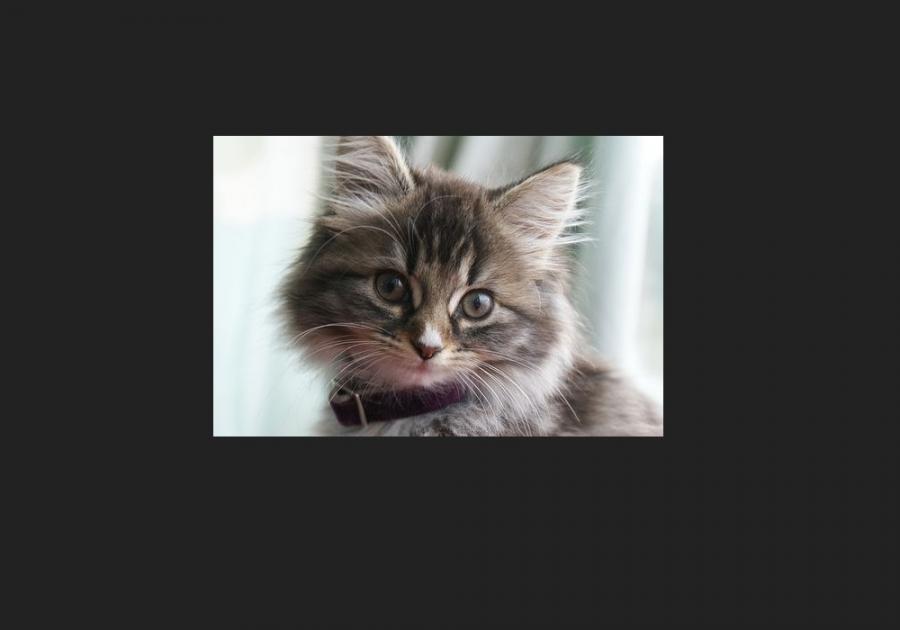 Atestat informatica Caini si pisici