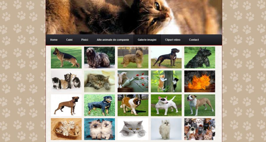Atestat informatica Animale de companie