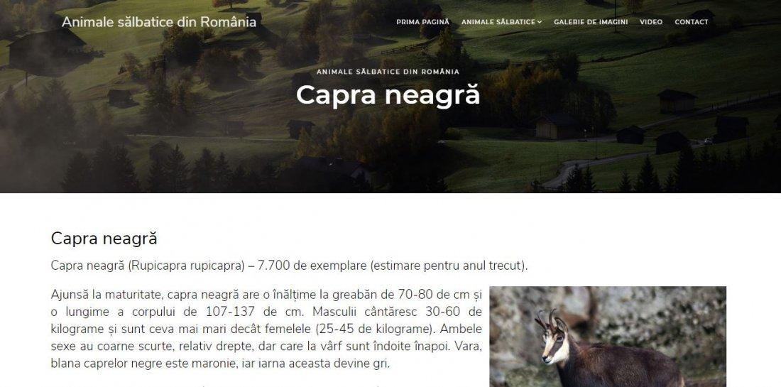 Atestat informatica Animale salbatice din Romania