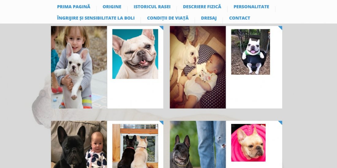 Atestat informatica Bulldog francez