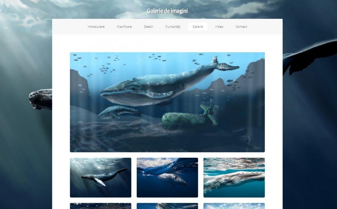 Atestat informatica Lumea balenelor