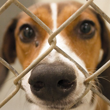 Atestat informatica Adapost de animale