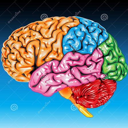 Atestat informatica Creierul uman