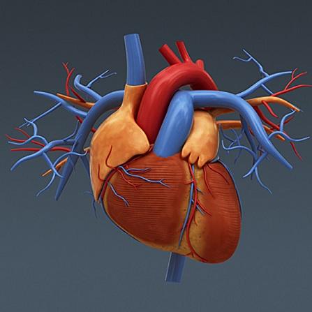 Atestat informatica Inima