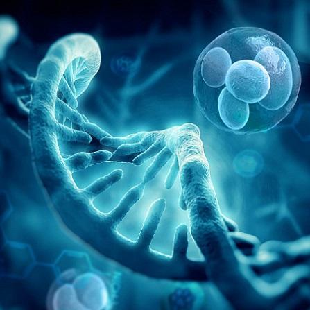 Atestat informatica Genetica