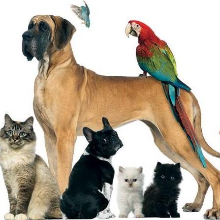 Atestat informatica Sfaturi pentru iubitorii de animale de companie
